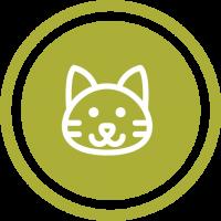 Gatos - Animais